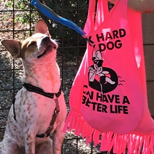 A reusable T-shirt bag is filled with dog toys and treats, a dog sits in the background and is grinning