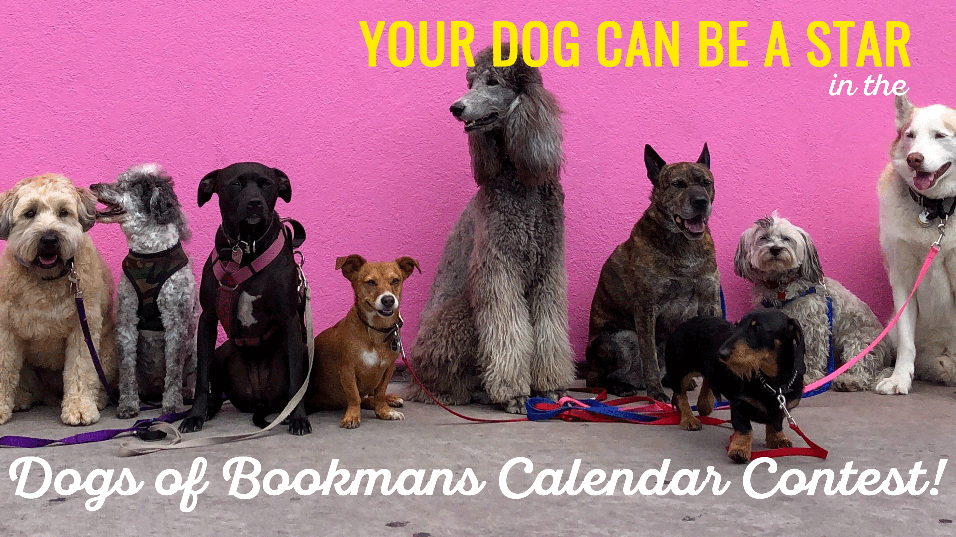 Barktober Dogs of Bookmans Calendar Contest all types of dogs against a pink wall